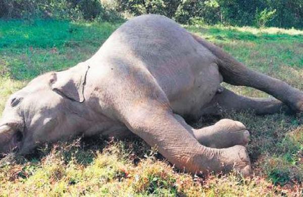 Elephant demise axe on forest ranger in Odisha