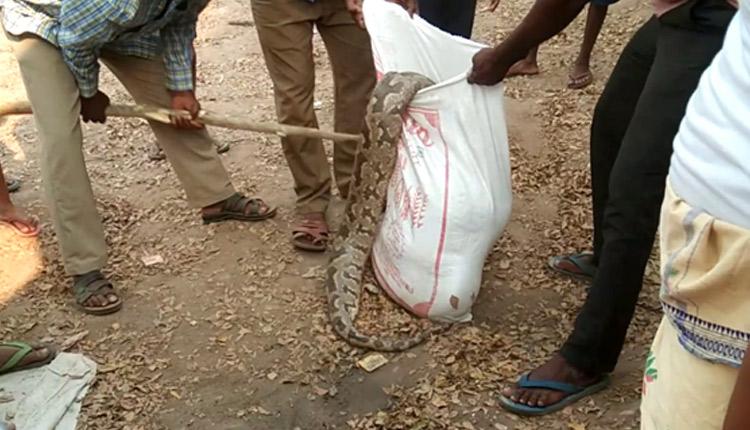 Odisha: Crime Branch Probe Demanded Into Death Of Python In Bhubaneswar | OTV News